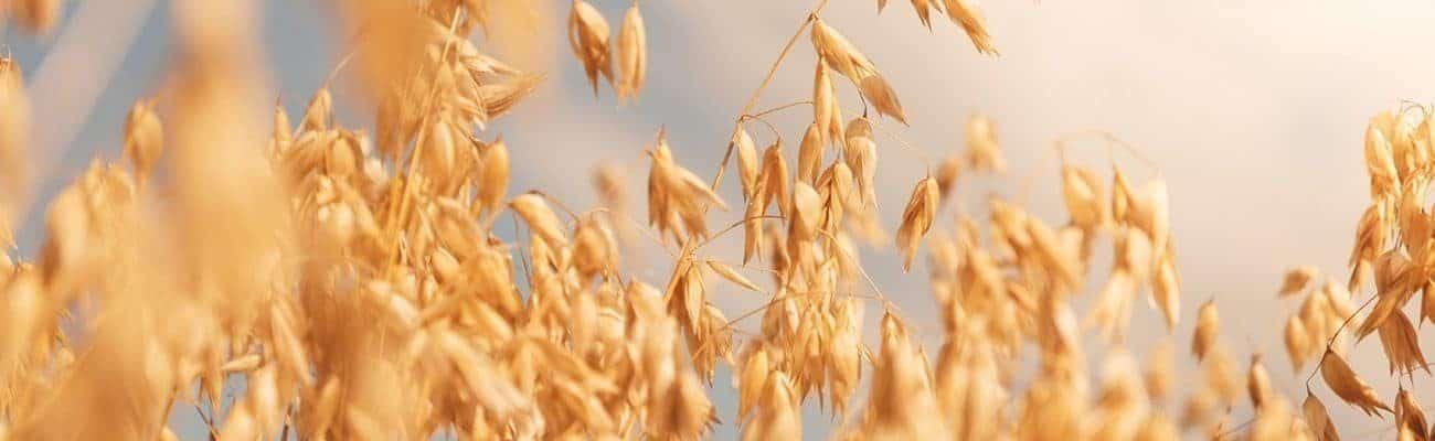 Gluten-free oats from Europe